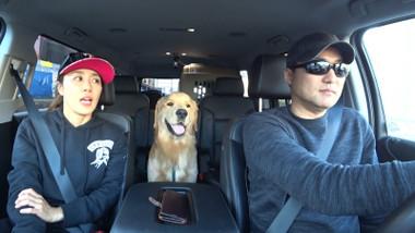 Pets GO! Doggy Trip Episode 1