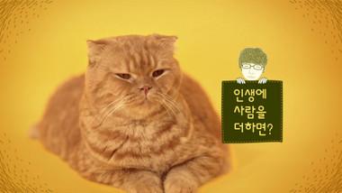 Teaser 2: Imaginary Cat