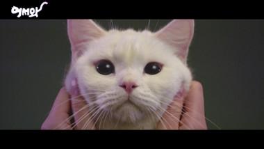 Teaser: Miau, el chico secreto