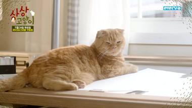 Promo 1: Imaginary Cat
